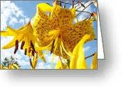Seasons Framed Prints Prints Greeting Cards - Yellow Tiger Lily Flowers art prints Lilies Greeting Card by Baslee Troutman Art Prints Photography