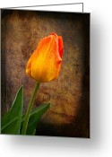 Texture Flower Photo Greeting Cards - Yellow Tulip Greeting Card by Fred LeBlanc