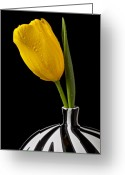 Stripes Greeting Cards - Yellow tulip in striped vase Greeting Card by Garry Gay