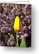 Dew Greeting Cards - Yellow tulip in the garden Greeting Card by Garry Gay
