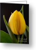 Textured Floral Greeting Cards - Yellow Tulip Greeting Card by Kaye Menner