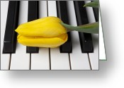 Dew Greeting Cards - Yellow tulip on piano keys Greeting Card by Garry Gay