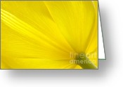 Spring Tulip Greeting Cards - Yellow Tulip Greeting Card by Sharon  Talson