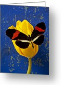 Wood Photo Greeting Cards - Yellow Tulip With Orange and Black Butterfly Greeting Card by Garry Gay