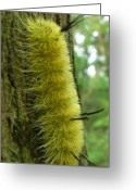 Oldgrowth Greeting Cards - Yellow Tussock Greeting Card by Joshua Bales