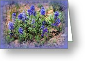 Blue Flowers Greeting Cards - Yellowstone Lupine Blue Greeting Card by Carol Groenen