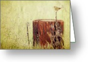 Wildflower Photography Greeting Cards - Yellowthroat Perched On Thin Branch Greeting Card by Susan Gary