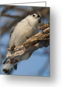 Nature And Wildlife Greeting Cards - Yes.. Can I help you.. Greeting Card by Nina Stavlund