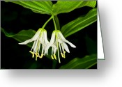 Sub Greeting Cards - Yoho - Roughfruit Fairybells Greeting Card by Terry Elniski
