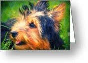 Pet Picture Greeting Cards - Yorki Greeting Card by Angela Doelling AD DESIGN Photo and PhotoArt