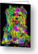 Dogs Digital Art Greeting Cards - Yorkie Beauty Greeting Card by Zaira Dzhaubaeva