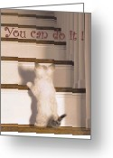 Kitten Greeting Card Greeting Cards - You Can Do It Greeting Card by Karon Melillo DeVega