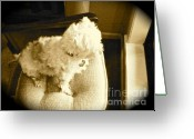 Lapdog Greeting Cards - You Cant Beat a Dogs Love Greeting Card by Chuck Taylor