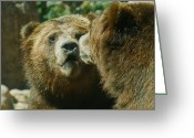 Grizzly Bears Greeting Cards - You Dont Say Greeting Card by Ernie Echols
