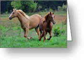 Equine Greeting Cards - You Go That Way - 51007144f Greeting Card by Paul Lyndon Phillips