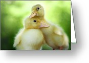 Duckling Greeting Cards - You Make Me Smile Greeting Card by Amy Tyler