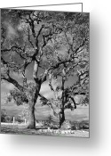 Oak Trees Greeting Cards - You Never Let Me Down Greeting Card by Laurie Search