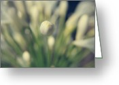 Flower Buds Greeting Cards - You Surround Me Greeting Card by Laurie Search