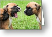 Boxer Greeting Cards - You Talking to Me Greeting Card by Renae Frankz