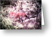 White Tail Deer Print Digital Art Greeting Cards - Young Dinner Couple Greeting Card by James Granberry