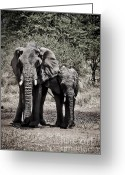 Waterhole Greeting Cards - Young Elephant and Mom Abstract Greeting Card by Darcy Michaelchuk