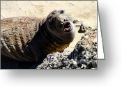 Sea Animal Greeting Cards - Young Elephant Seal Molting . 7D16100 Greeting Card by Wingsdomain Art and Photography