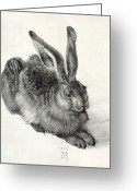 Hare Greeting Cards - Young Hare, By Durer Greeting Card by Sheila Terry