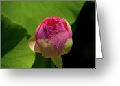 Lotus Leaves Greeting Cards - Young Lotus Greeting Card by Lee Chon