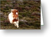 Mane Greeting Cards - Young Pony Running Downhill Through Heather Greeting Card by Dominique Walterson