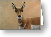 Wildlife Drawings Greeting Cards - Young Pronghorn Greeting Card by James W Johnson