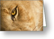 Whiskers Photo Greeting Cards - Your Lion Eye Greeting Card by Carolyn Marshall