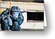 Chimpanzee Greeting Cards - Your Stupidity Amazes Me Greeting Card by Michel  Keck