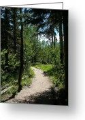 Rocky Mountain National Park Greeting Cards Greeting Cards - Ypsilon Trail  Greeting Card by Debbie Poetsch