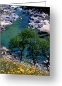 Transformative Art Greeting Cards - Yuba River in Spring Greeting Card by Lisa Redfern
