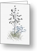 Yucca Plant Greeting Cards - Yucca - White Sands New Mexico Greeting Card by Mark Christian