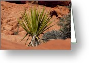 Yucca Plant Greeting Cards - Yucca Beauty Greeting Card by Kelley King