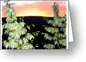 Sundown Greeting Cards - Yucca Blossoms At Sundown Greeting Card by Will Borden