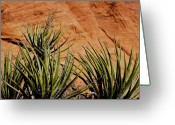 Yucca Plant Greeting Cards - Yucca Family Greeting Card by Kelley King