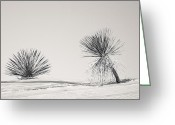 Kaiser Greeting Cards - yucca in White sands Greeting Card by Ralf Kaiser