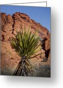 Yucca Plant Greeting Cards - Yucca Greeting Card by Kelley King