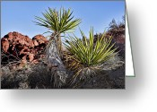 Yucca Plant Greeting Cards - Yucca Pair Greeting Card by Kelley King