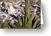 Yucca Plant Greeting Cards - Yucca Plant Greeting Card by Jeremy Woodhouse
