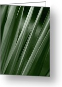 Yucca Plant Greeting Cards - Yucca Spikes Greeting Card by Jeannie Burleson