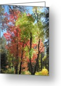 Changing Colors Greeting Cards - Yummy Fall Colors Greeting Card by Sandy Tracey