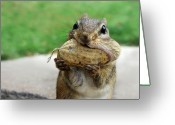 Chipmunk Greeting Cards - Yummy Greeting Card by Lori Deiter