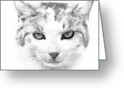 Cat Picture Greeting Cards - Zahra Greeting Card by Steven Richardson