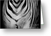 Grasslands Greeting Cards - Zebra 1 Greeting Card by Cheryl Young