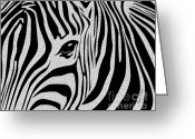 Grasslands Greeting Cards - Zebra 3 Greeting Card by Cheryl Young