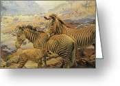 In Focus Greeting Cards - Zebra Family  Greeting Card by John Kain