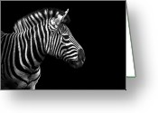 Zebra Photo Greeting Cards - Zebra In Black And White Greeting Card by Malcolm MacGregor